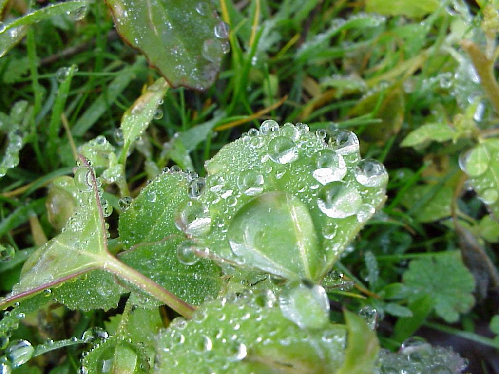 Gotas de lluvia2